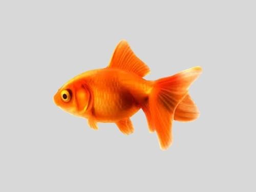 Ψάρια κρύου νερού